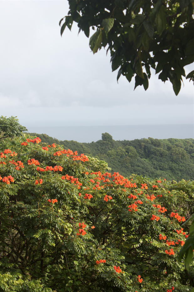 An overlook on the road to Hana.