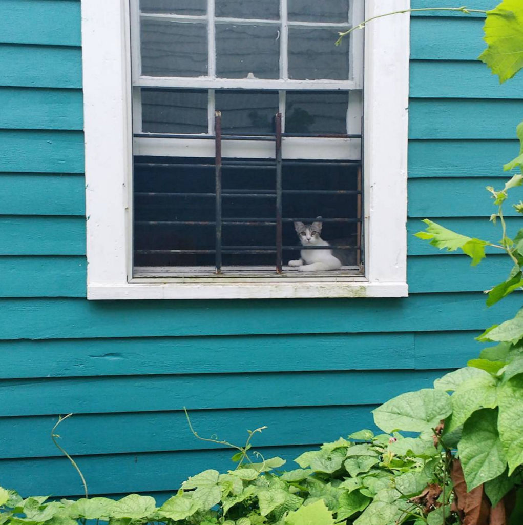 A neighbor's attempt at taming a feral kitten, who yearns to escape.